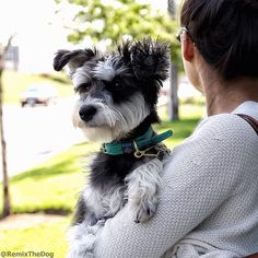 Things only schnauzer parents will understand!