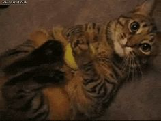 Please sir don't take my ball…cute gif!