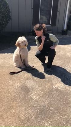 This trainer raved about how quickly this sweet Goldendoodle picked up on training. Well-bred Goldendoodles and mini Goldendoodles are typically very easy to train. are in the right place about hair styles ste Goldendoodle Haircuts, Goldendoodle Grooming, Cockapoo Dog, Dog Haircuts, Goldendoodle Training, Red Goldendoodle, Full Grown Mini Goldendoodle, Goldendoodle Miniature, Standard Goldendoodle