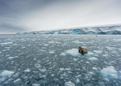 Go With the Floe -- Walruses on an ice floe off of Kvitøya (White Island) in Norway's Svalbard archipelago return the gaze of Your Shot member Christian Aslund's camera lens. They are most often found near the Arctic Circle, an environment to which they're perfectly suited, thanks to their blubbery bodies, ice-piercing tusks, & ability to slow their heartbeat to withstand the freezing water temperatures.  -- National Geographic, Photo of the Day, Best of September 2016 -- saved 10-17-16