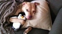 Help end breed specific legislation in PG county, MD. Petition by change.org