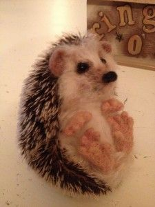 Mohair and needle felted hedgehog. He's so cute! Gotta figure out how to do this.