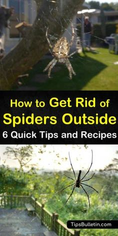 Keep Spiders Away, Get Rid Of Spiders, Killing Spiders, What Kills Spiders, Spider Spray, Spider Webs, House Spider, Peppermint Plants, Garden Spider