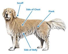 Best Places To Inject Insulin In Dogs