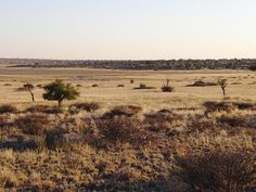 Kgalagadi Transfrontier Park, Botswana Nature Reserve, Conservation, South Africa, Trail, National Parks, Explore, Mountains, Places, Photos