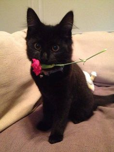 * * THAT AWKWARD MOMENT WHEN SOMEONE BRINGS A FLOWER AND IT'S NOT FOR YOU.