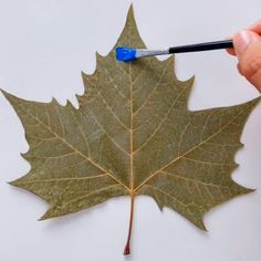 quotes creative canvases Amazing painting skills ( fascinating painting on a maple leaf) Art Drawings Sketches Simple, Pencil Art Drawings, Canvas Painting Tutorials, Diy Painting, Art Painting Gallery, Easy Canvas Art, Painted Leaves, Leaf Art, Languages