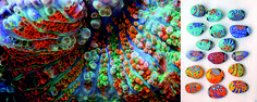great_barrier_reef_photos8
