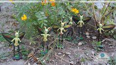 Familia de hadas jade Plants, Woods, Butterflies, Faeries, Plant, Planets