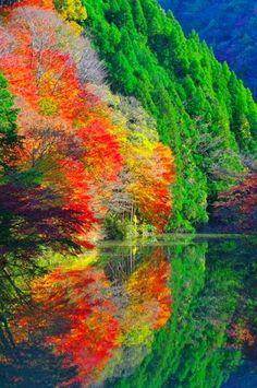 """La """"Belleza de la Naturaleza"""", en todo su esplendor..."""