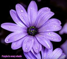 Image result for motto with purple daisies