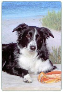 "Border Collie Cutting Board by Canine Designs. $29.95. Heat resistant.. Scratch Resistant - imprinted on back. Made of tempered glass making it virtually unbreakable.. Size: 8"" x 11"". Hygenic and easy to clean.. Our beautiful, dog breed cutting boards will enhance any kitchen. They make great gifts, are made of tempered glass and measure 9"" x 12"". They are heat resistant, scratch resistant, virtually unbreakable, easily cleaned and dishwasher safe."