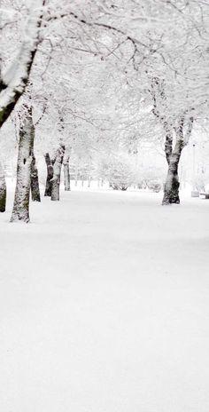 Winter Wonderland Snow Tree Backdrop - 9441