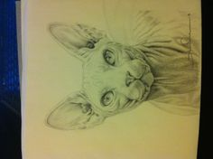 Here is a sketch I did of a sphynx I'll love have it as a tattoo