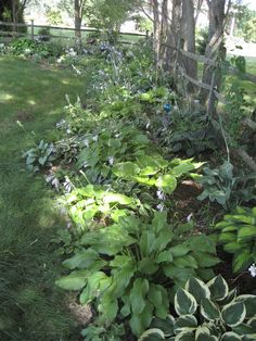 View of Hosta bed