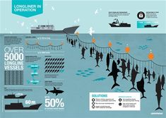 Longline infographic for the Greenpeace International Longline Report. Design: Sue Cowell / atomodesign.nl