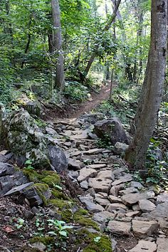 <3 this trail, Best built rock gardens I have ever seen Rocky Knob Mountain Bike Park ~ Boone NC ~