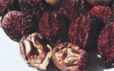 Native butternut tree - walnut family