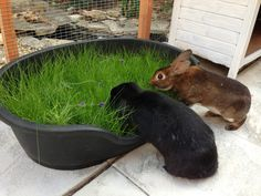 ♥ Small Pet Care ♥  An old dog bed sown with grass seed - must remember to buy grass seed in the fall for winter and lots of dollar store plastic growing tubs!