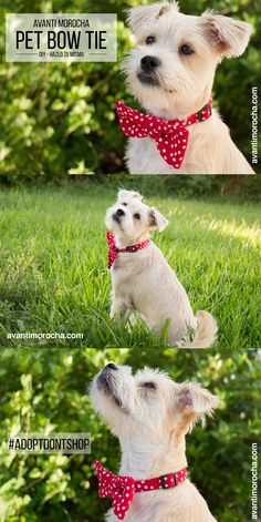 This beautiful  DIY pet bow tie  it's great for both dogs or cats. If you are looking for a pet please don't shop, instead you should adopt. If you are a foster parent of a pet this DIY may be really helpful when you are looking for a family for your foster.