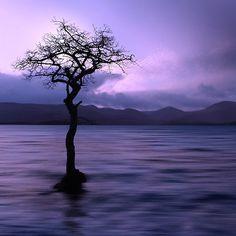 ~~  Winters Lonely Tree ~  Loch Lomond shoreline, Highlands, Scotland by ChristopherSwan ~~