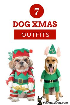 3c74e44186c3 Dog Christmas Outfits & Costumes: 10 Funny Pics + Where You Can Get Them