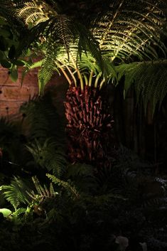 Top 10 best trees for small gardens - Living Colour Gardens Small Back Gardens, Small Trees For Garden, Small Cottage Garden Ideas, Small Courtyard Gardens, Cottage Garden Plants, Garden Living, Small Garden Design, Outdoor Gardens, Tropical Gardens