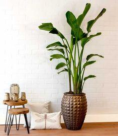 Exclusieve kamerplanten en plantenpotten | Chicplants Decor, Glass Vase, Interior, House, Flower Stands, Home Decor, Vase, Room, Happy Places