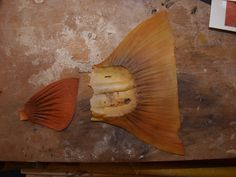 Colorado Prospector - Gem and mineral prospecting and mining forums > Taxidermy Class