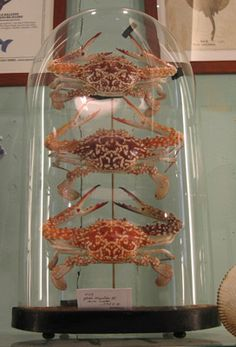 crabs in a bell jar