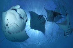 Picture: Tobias Friedrich (via Underwater photography competition medal winners 2011/12 - Telegraph)