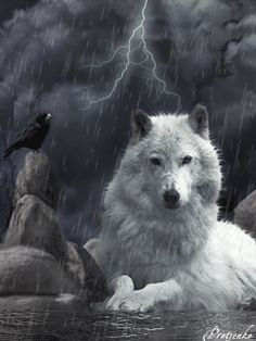 Wolf Images, Wolf Pictures, Wolf Patronus, Tribal Wolf Tattoo, Wolves And Women, Native American Images, Fantasy Wolf, Wolf Spirit Animal, Wolf Love
