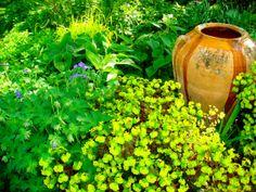 Shade garden by Jardin
