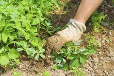 Come eliminare le erbacce dal giardino in modo naturale ed ecologico