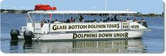 Dolphin Tours in Orange Beach - This was the highlight of our vacation in 2010 when we visited Gulf Shores, AL :)