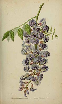 """Glycine -1839-50 - Natural History Museum, London, U.K."
