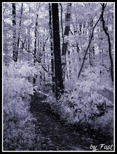 Brown County Indiana - Infrared