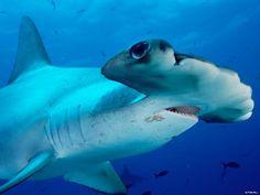 Vida de Oceano - Papel de Parede Grátis: http://wallpapic-br.com/oceano-e-mar/vida-de-oceano/wallpaper-32584
