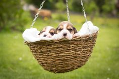 a basket full of cuteness <3   Copyright: www.sitz-und-blitz.net