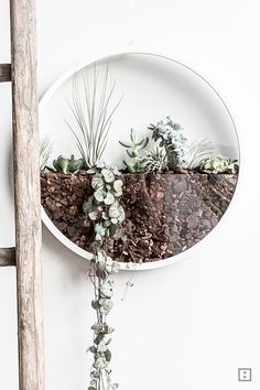green wall clock - tillandsias & begrünte Wanduhr – Tillandsien & Sukkulenten Wall clock with succulents and tillandsias -