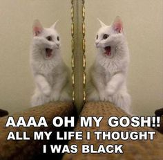 Funny Pictures Of Cats