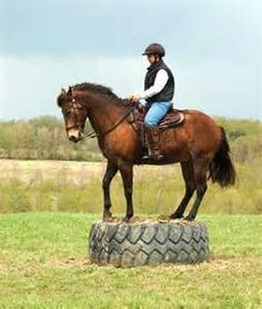 Make your own horse training obstacles