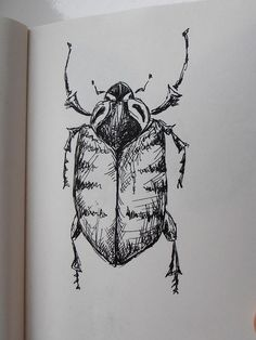 insect pen sketch