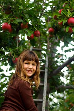 Apple Picking in the Berkshires