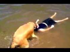 Dogs Never Lie About Love - Smartest Dogs Compilation - Man's Best Friend