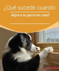 ¿Qué sucede cuando dejas a tu perro en casa? Se acerca un viaje y dejas a tu perro en casa solo . En este artículo compartimos algunos típs para que sepas qué sucede cuando tu perro siente tu ausencia.