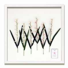 The Shellatier Collection - Framed Coquina Shell Delphiniums Pink / Large