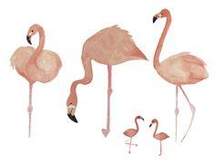 Watercolor Birds by Valeri Nick on @creativemarket