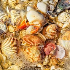 The Best Shelling Beaches in America - Coastal Living