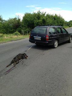 Изверг. Тази шокираща снимка на автомобил, който влачи вързано полуживо куче, е получена около 19:40 часа във фейсбук групата Animal Hope. Според написаното